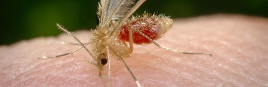puntura zanzara