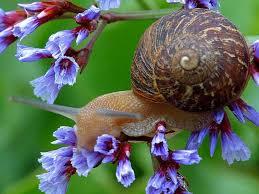 lumaca fiore