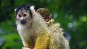 little-monkey-2648603__340