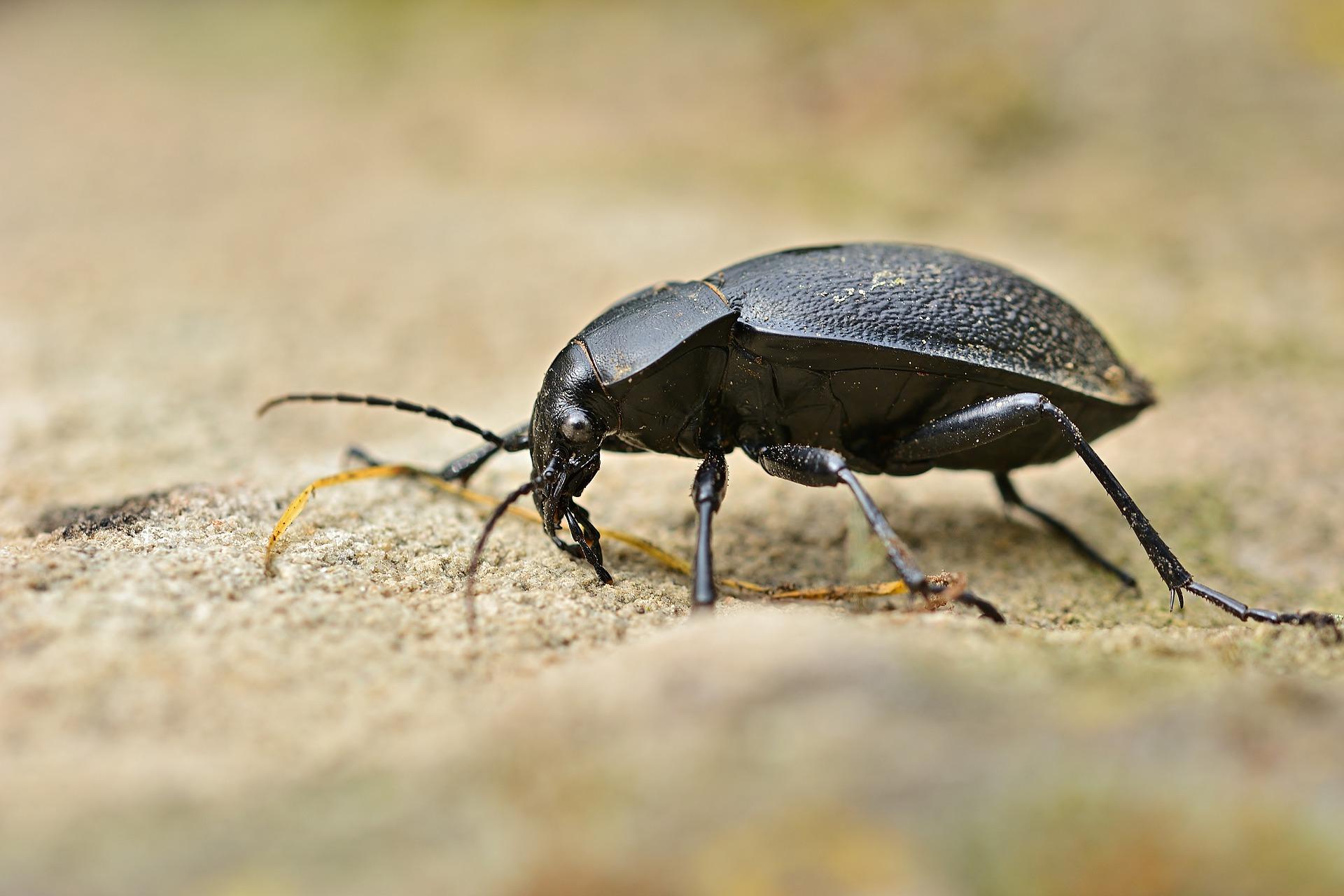 5 beetle-5224434_1920
