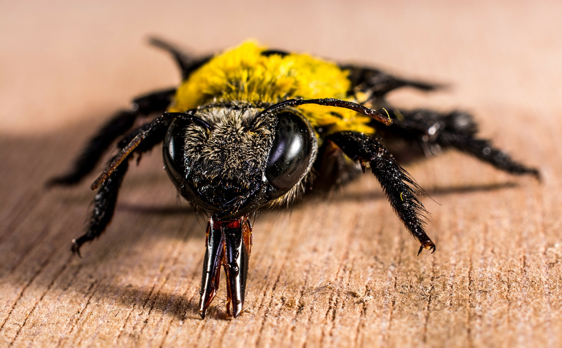 7 insect-278083_1920 (1)